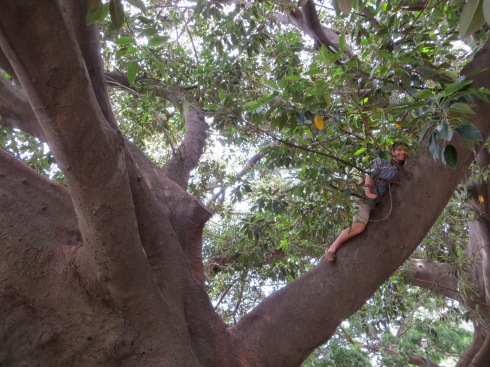 josh in a tree