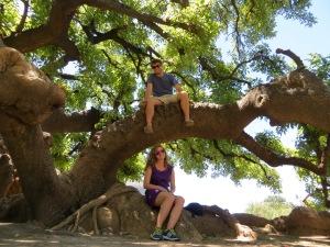arg tree